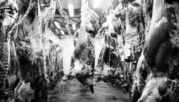 How We Punish Cruelty To Farmed Animals