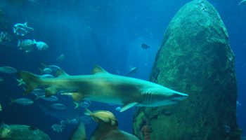 Oceanic Top Predators And Climate Change