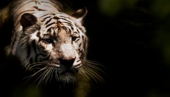 Impacting Perception Through Zoo Exhibit Design