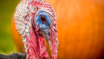Thanksgiving In The U.S. – An Infographic