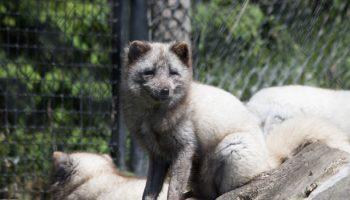 Captive Wild Animals And 24/7 Care