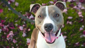 Breed-Specific Legislation And Bite Injury Severity