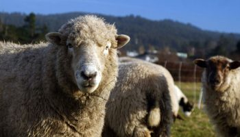 Public Opinion On Animal Farming Shows Half In U.S. Want An End To Slaughterhouses