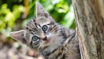 Cat Tracker: Citizen Science And Cats In Australia