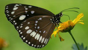 Faunalytics' Areas Of Improvement