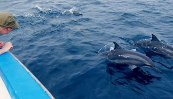 Tourism And Dolphin Disturbance