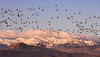 Improving The Survival Of Migratory Animals