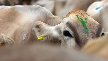 What Do Brazilians Know About The Dairy Industry?