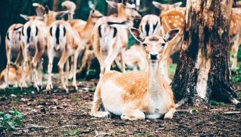 The Role Of Trees In Deer-Vehicle Accidents