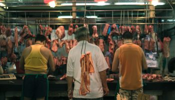 Animals, Stress, And Kosher Slaughter