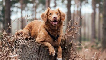 Do Dog Behavioral Evaluations Work?