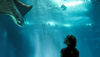 Public Opinion On Zoos And Aquariums: The Canadian Perspective