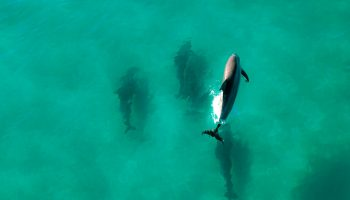 Dolphin Liberation As A Conservation Tool: A Case Study From Korea