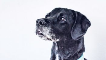 Photographing Shelter Dogs: You (Need to) Let the Dogs Out!