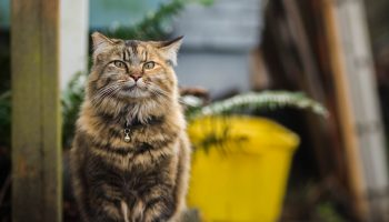 Feral Cats, Behavior, And Population Control Strategies