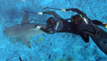 Shark-Diving Tourism: Concerns And Challenges