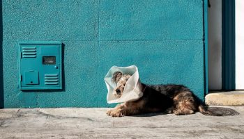 Teaching Veterinarians Animal Welfare In Latin America