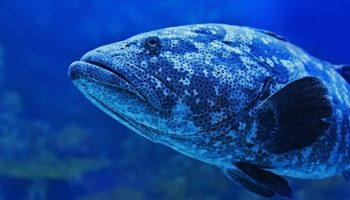 Aquatic Animal Welfare: Exploring The Scientific Basis