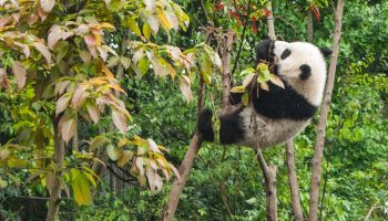 Cost-Benefit Analyses Of Conservation: A Case Study From China
