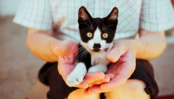 Companion Animals And People: One Health Perspective
