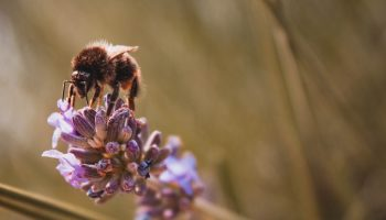 Is Fear Holding Back Bee Conservation?