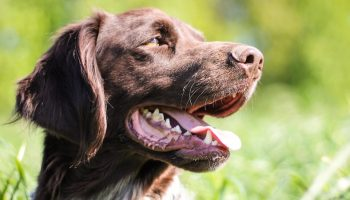 The Importance Of Data Sharing For Veterinarians