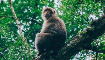 Faunalytics Index – January 2019