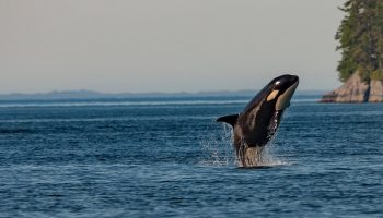 Killer Whales and Killer Plastics