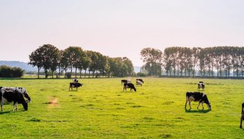 Climate Change And Animal Agriculture: A Three Step Plan For Policy Makers