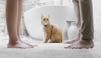 Companion Animals, Humans, And Diseases: Risks And Recommendations