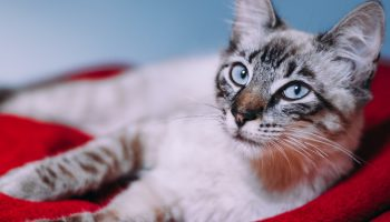How Can Veterinarians Reduce Euthanasia Rates In Shelters?