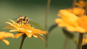 Bumblebee School: Learning And Teaching By Example
