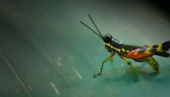 Insects – What Does The Future Hold For Them?