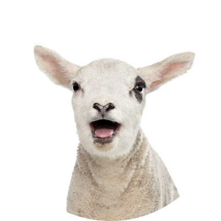 faunalytics-popup-lamb.png