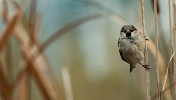 Private Land And Public Good:  A Study In Bird Conservation