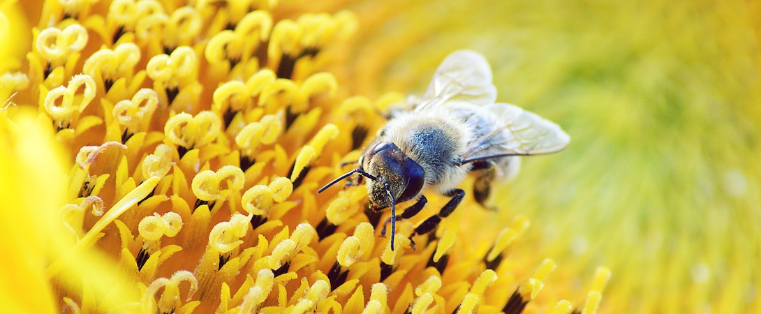 The Importance Of Bumblebee Conservation