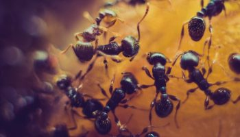ants close up