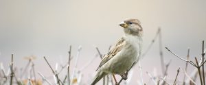 small bird on a twig in a field