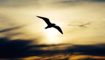 bird silhouette against a sunset