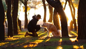 person and dog in a sunlit forest.