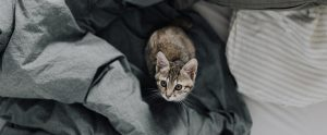 cat in bed with blankets