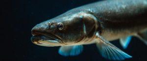 fish profile black water