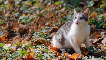 whit tabby cat outdoors