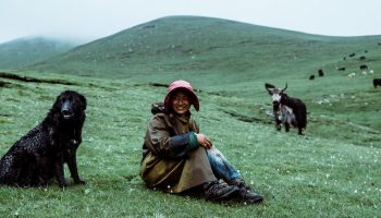 person on hill with dog and cows