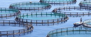fish farm image