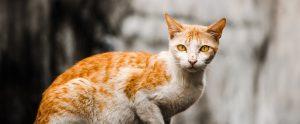 orange feral cat outside