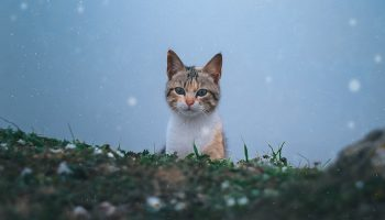 cat outdoors in the snow