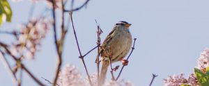 songbird-in-trees