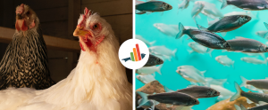chickens and fishes