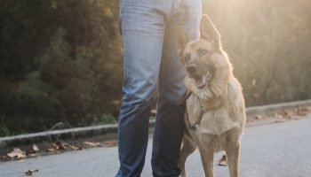 dog sitting human standing